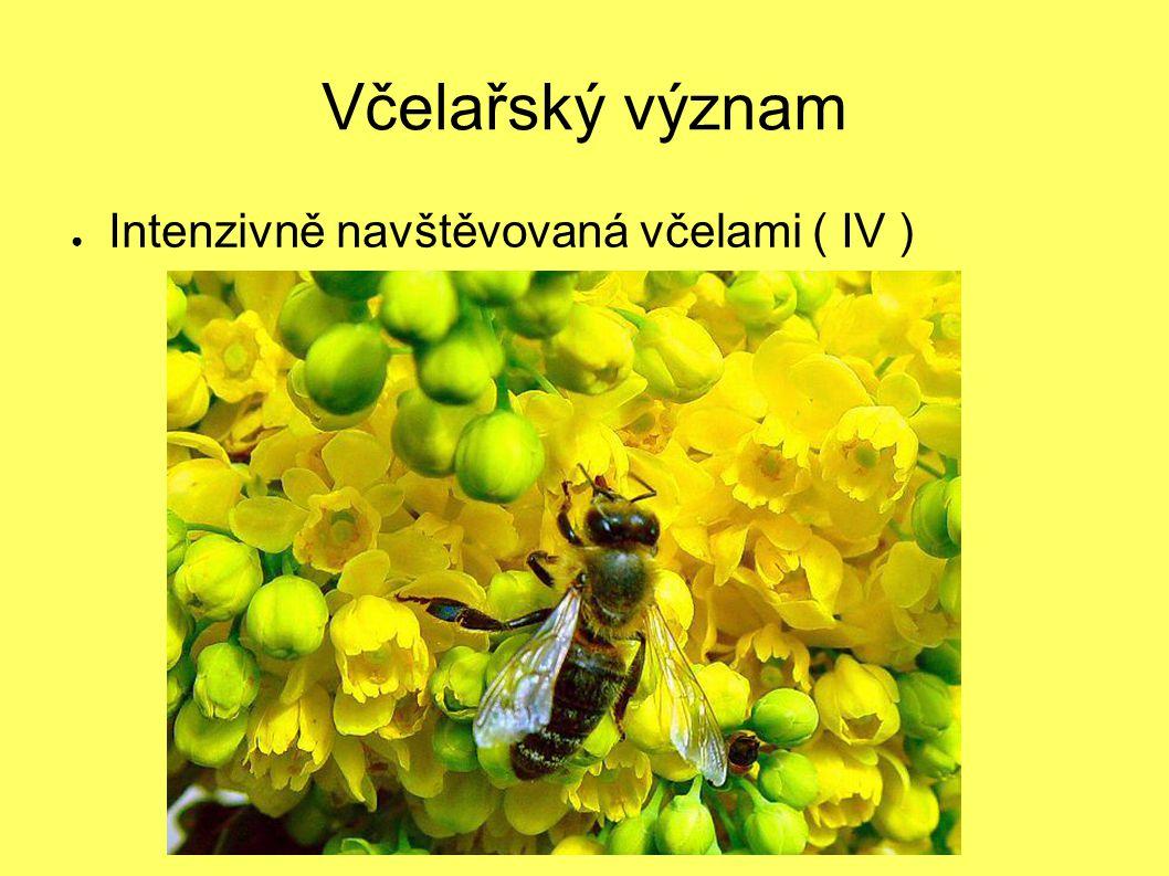 Včelařský význam Intenzivně navštěvovaná včelami ( IV )