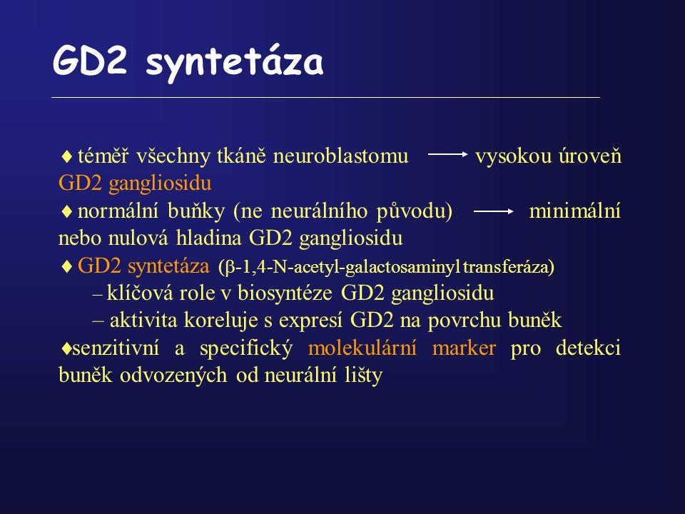 GD2 syntetáza téměř všechny tkáně neuroblastomu vysokou úroveň GD2 gangliosidu.