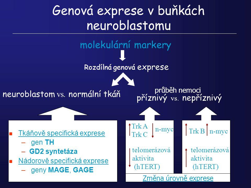 Genová exprese v buňkách neuroblastomu