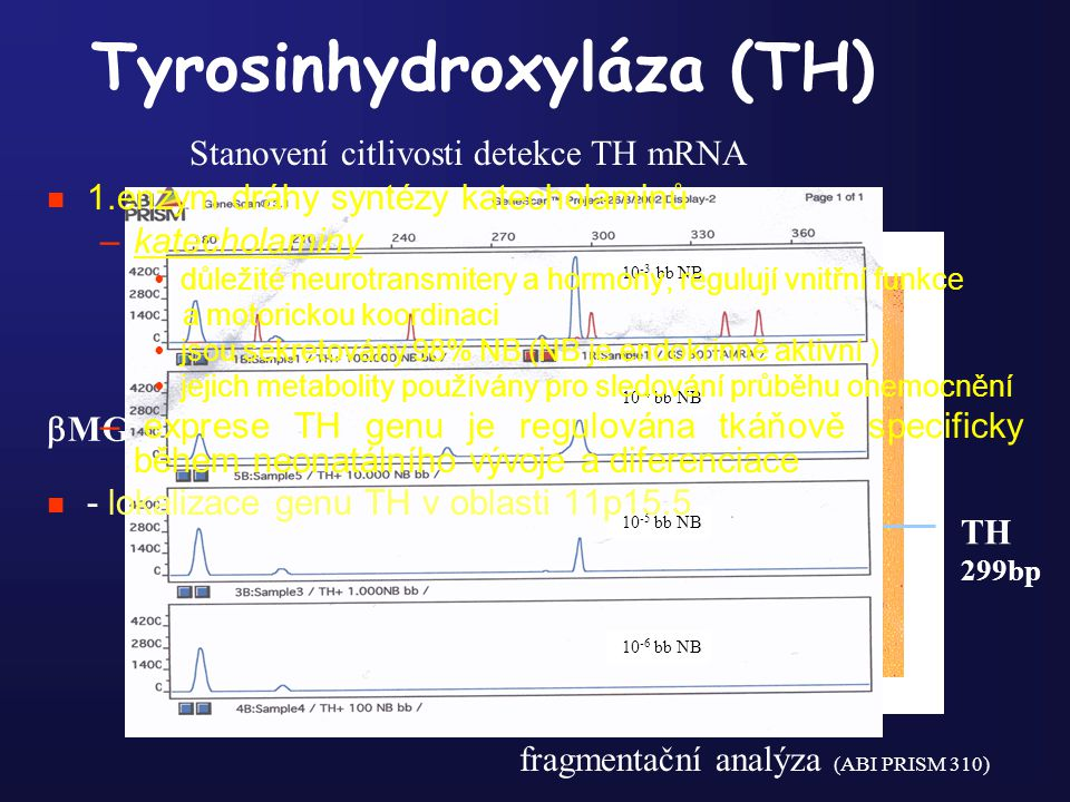 Tyrosinhydroxyláza (TH)
