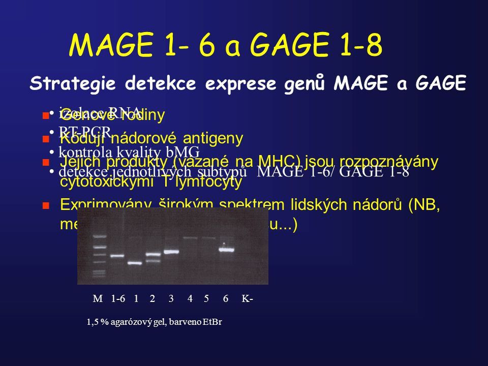 MAGE 1- 6 a GAGE 1-8 Strategie detekce exprese genů MAGE a GAGE