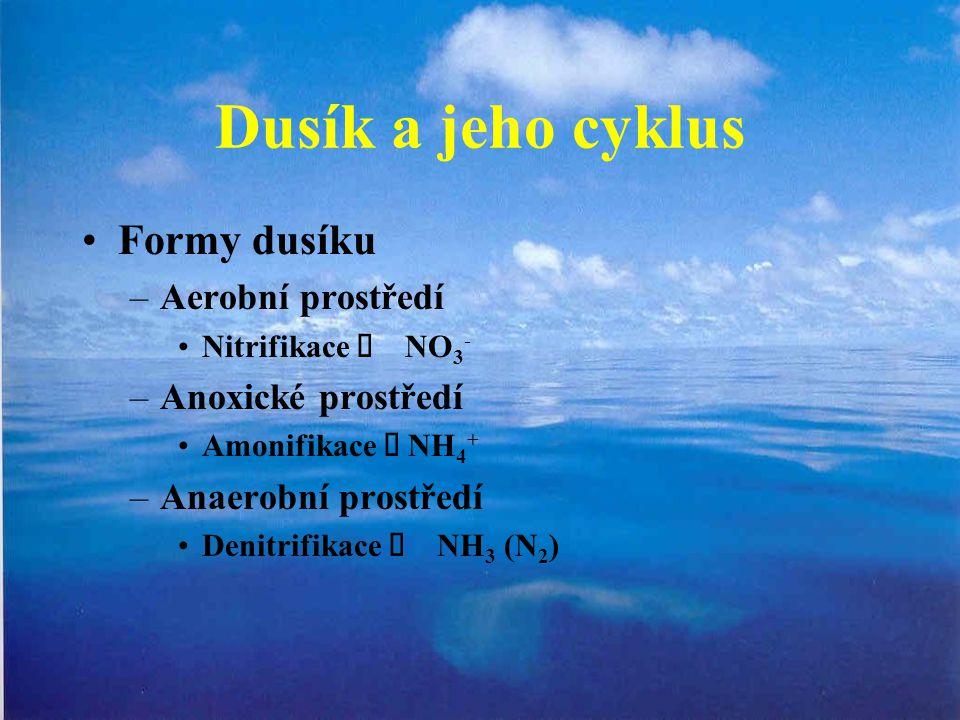 Dusík a jeho cyklus Formy dusíku Aerobní prostředí Anoxické prostředí