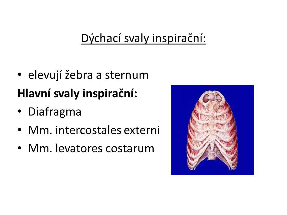 Dýchací svaly inspirační: