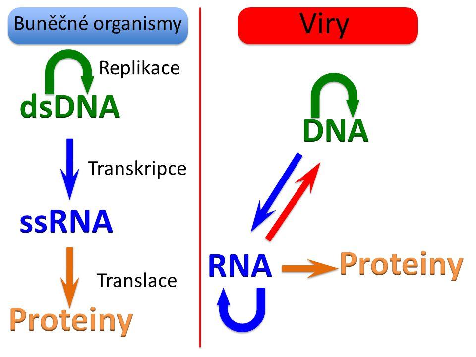 dsDNA DNA ssRNA RNA Proteiny Proteiny