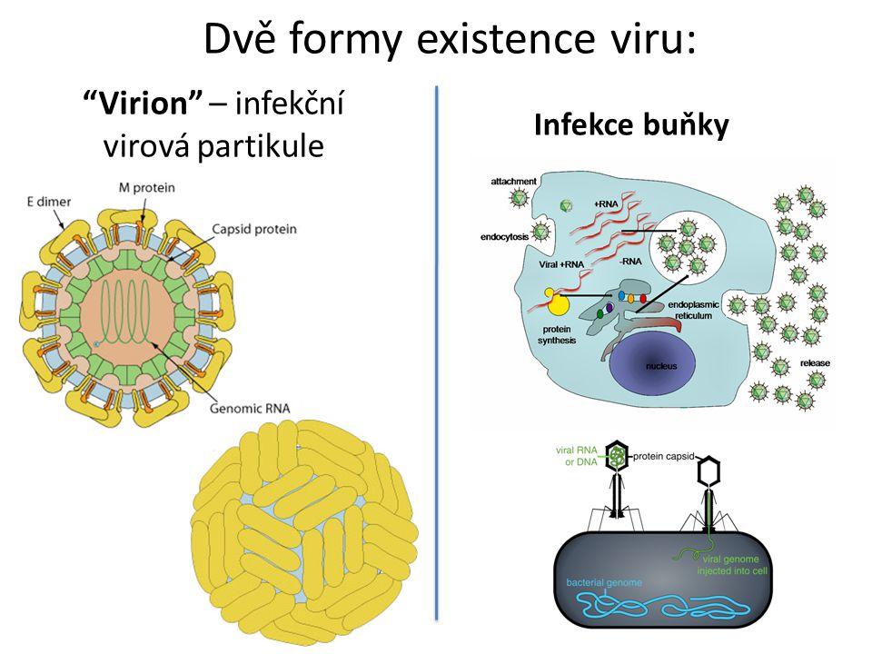 Virion – infekční virová partikule