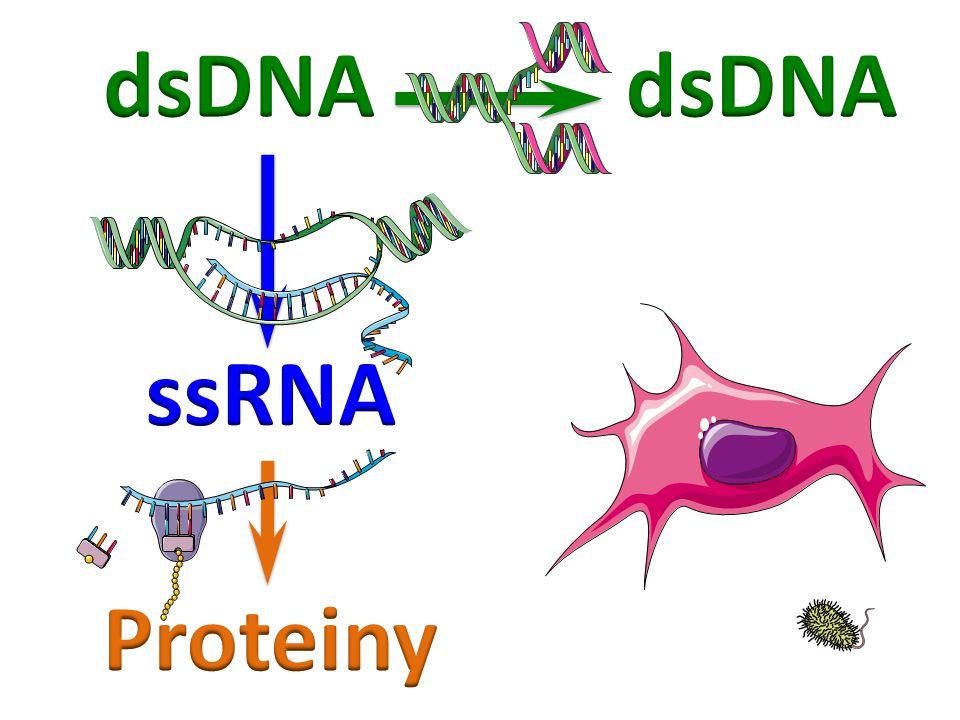 dsDNA dsDNA ssRNA Proteiny