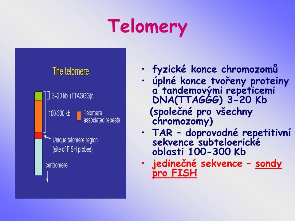 Telomery fyzické konce chromozomů