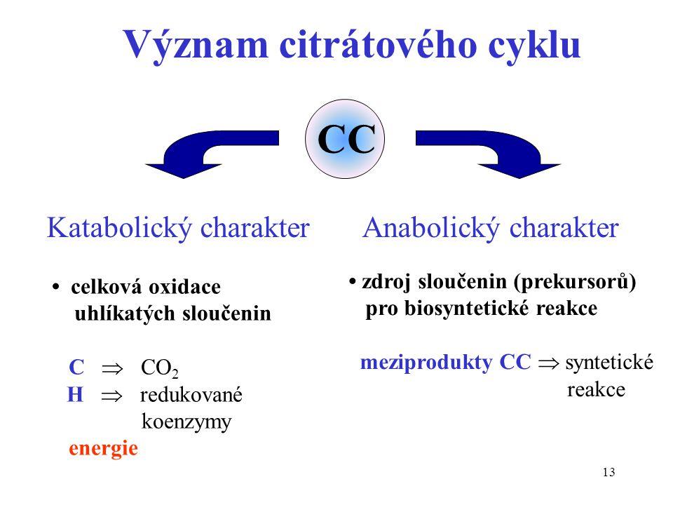 Význam citrátového cyklu