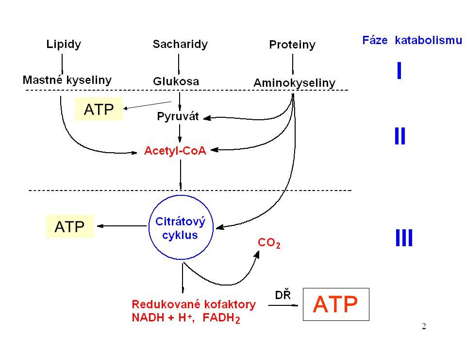 ATP ATP ATP