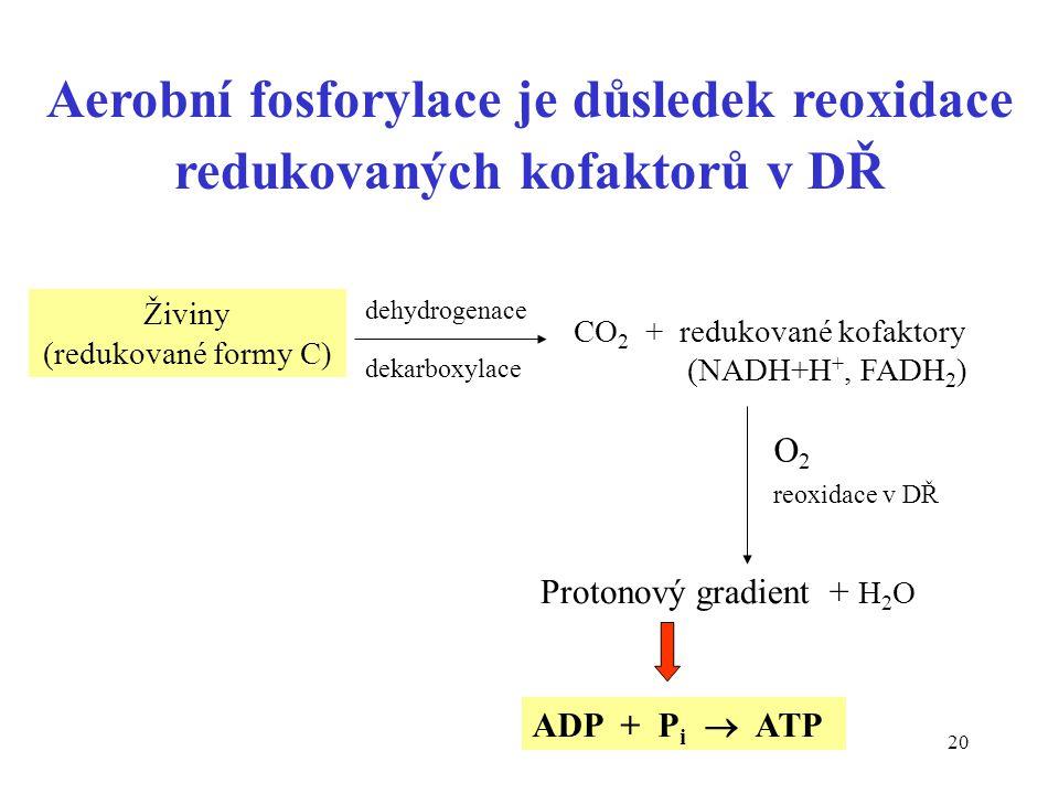 Aerobní fosforylace je důsledek reoxidace redukovaných kofaktorů v DŘ