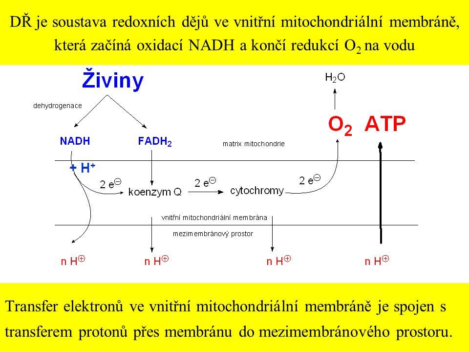 DŘ je soustava redoxních dějů ve vnitřní mitochondriální membráně, která začíná oxidací NADH a končí redukcí O2 na vodu