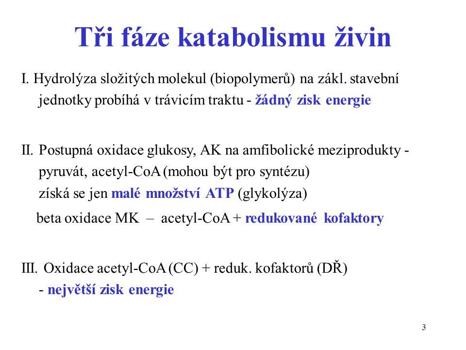Tři fáze katabolismu živin