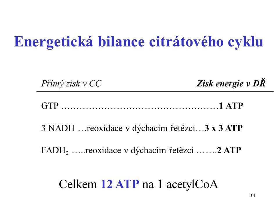 Energetická bilance citrátového cyklu