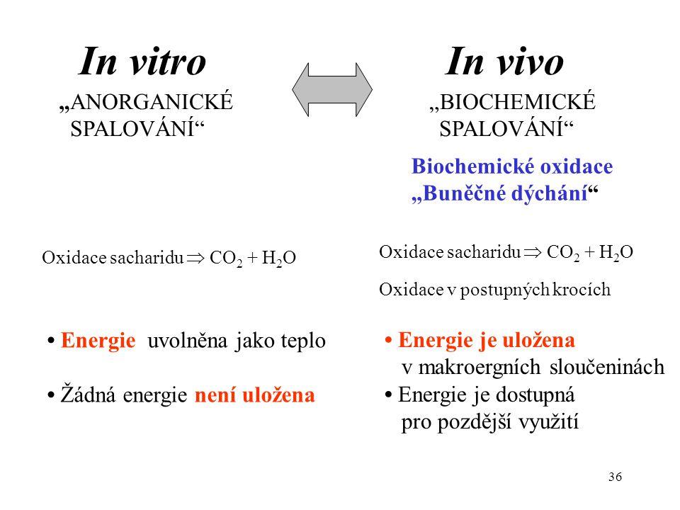 """In vitro In vivo """"ANORGANICKÉ """"BIOCHEMICKÉ SPALOVÁNÍ SPALOVÁNÍ"""