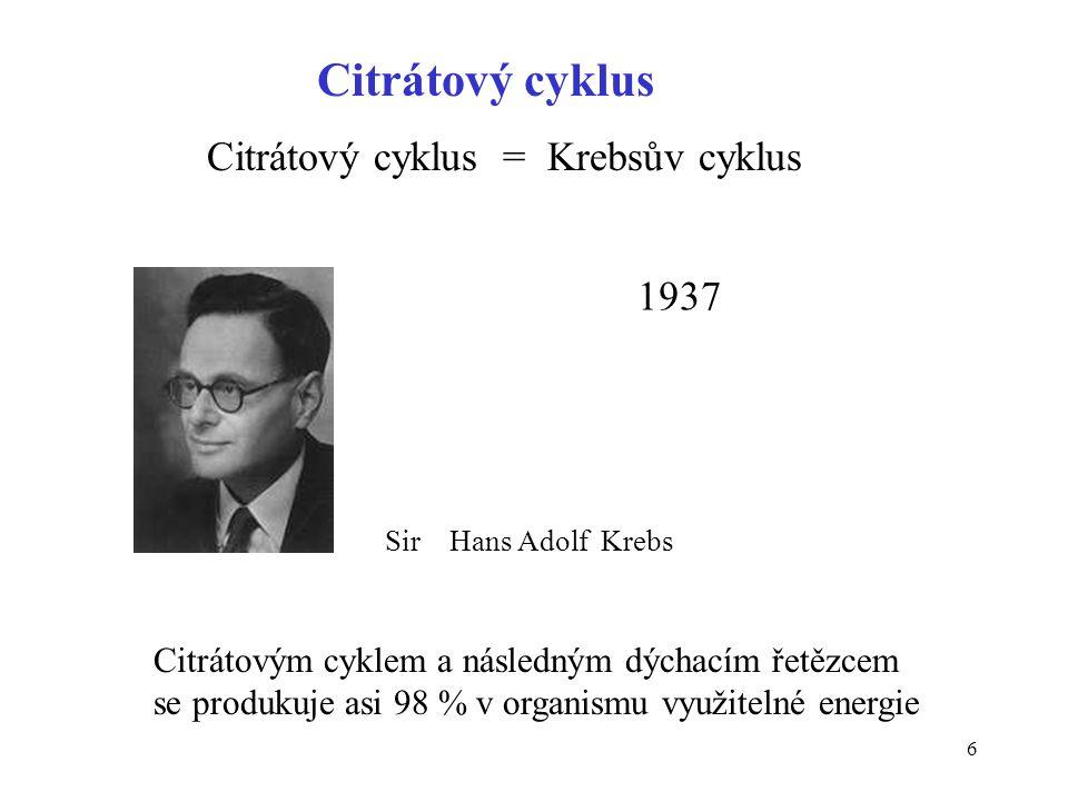 Citrátový cyklus Citrátový cyklus = Krebsův cyklus 1937
