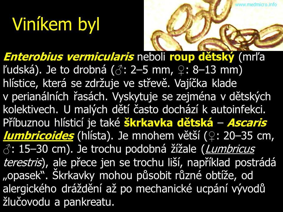www.medmicro.info Viníkem byl.