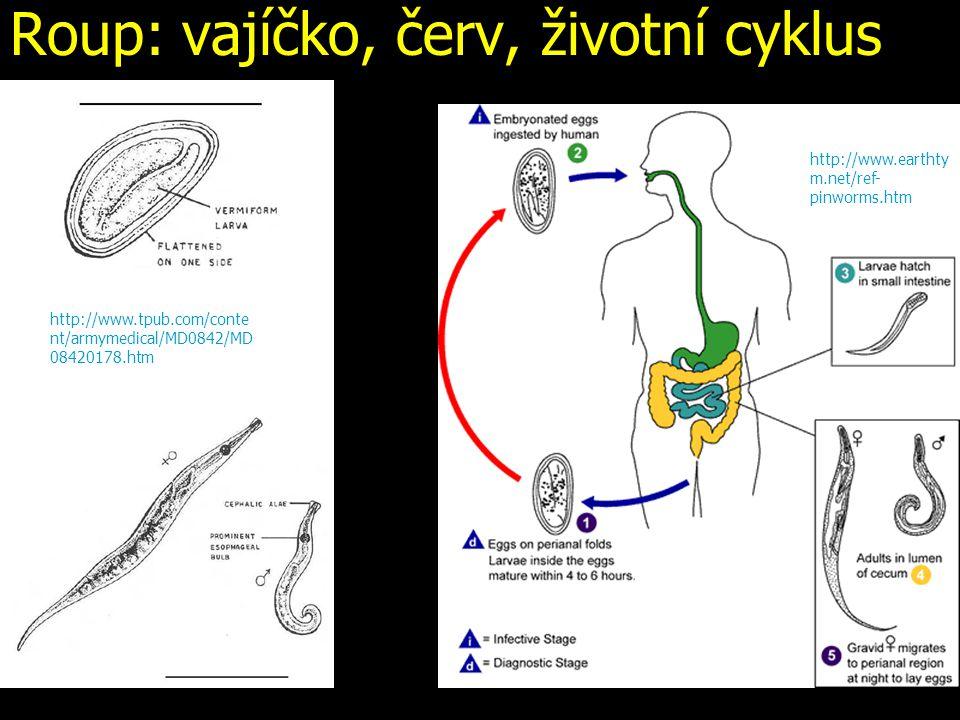 Roup: vajíčko, červ, životní cyklus