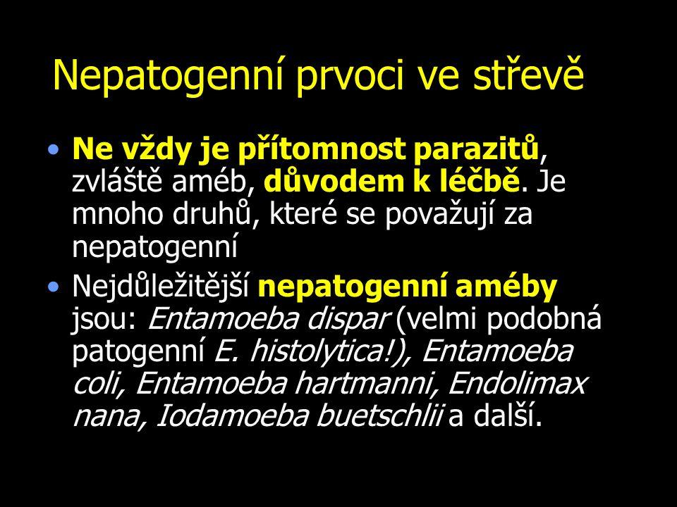 Nepatogenní prvoci ve střevě