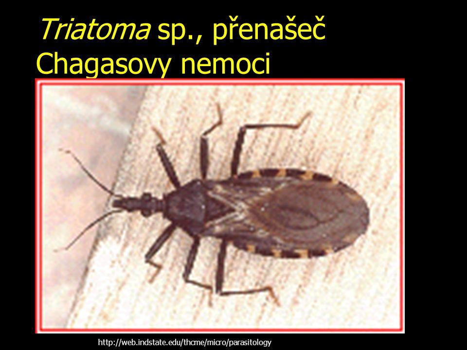 Triatoma sp., přenašeč Chagasovy nemoci