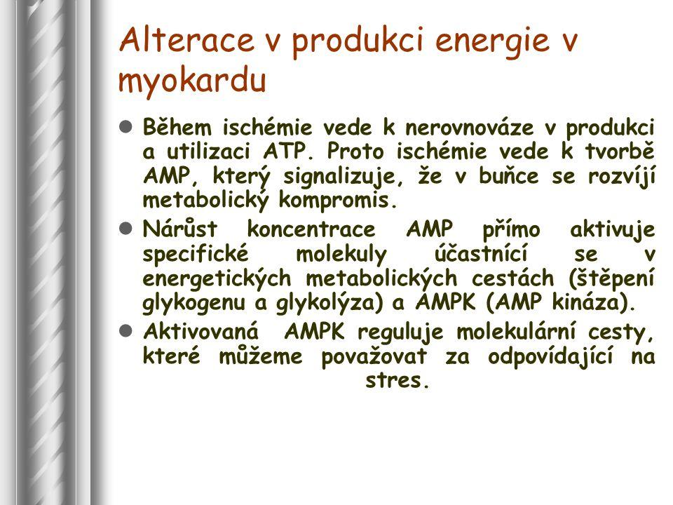 Alterace v produkci energie v myokardu