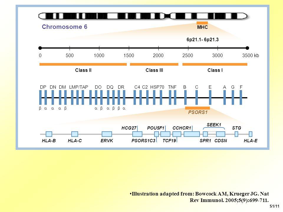 Chromosome 6 MHC. 3500 kb. 3000. 2500. 2000. 1500. 1000. 500. Class III. Class II. Class I.