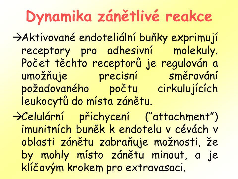 Dynamika zánětlivé reakce