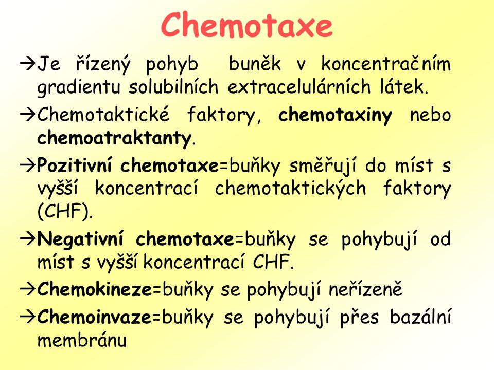Chemotaxe Je řízený pohyb buněk v koncentračním gradientu solubilních extracelulárních látek.