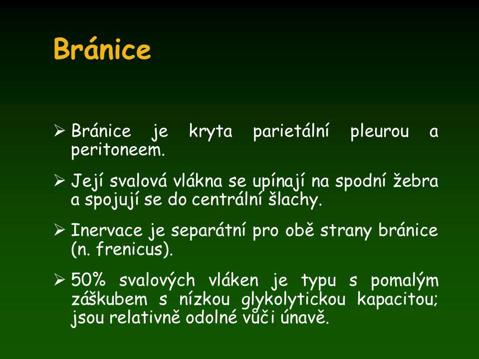 Bránice Bránice je kryta parietální pleurou a peritoneem.