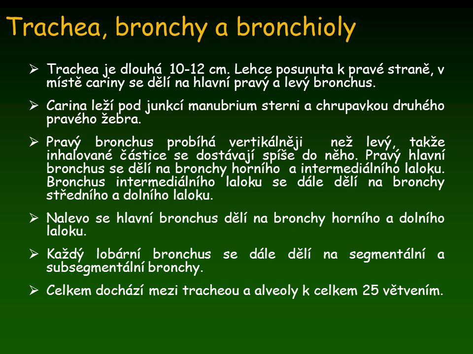 Trachea, bronchy a bronchioly