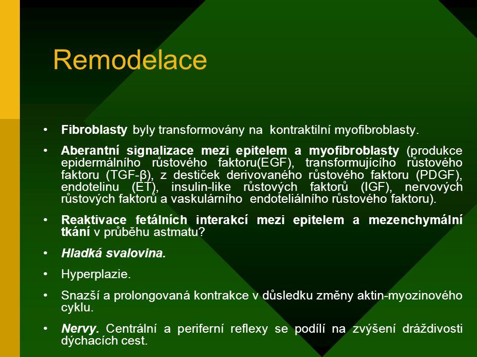 Remodelace Fibroblasty byly transformovány na kontraktilní myofibroblasty.