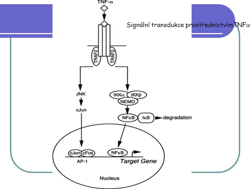 Signální transdukce prostřednictvímTNF