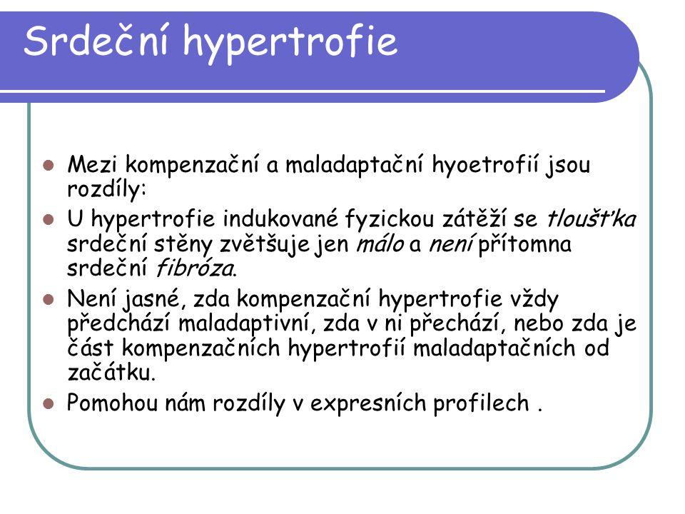 Srdeční hypertrofie Mezi kompenzační a maladaptační hyoetrofií jsou rozdíly: