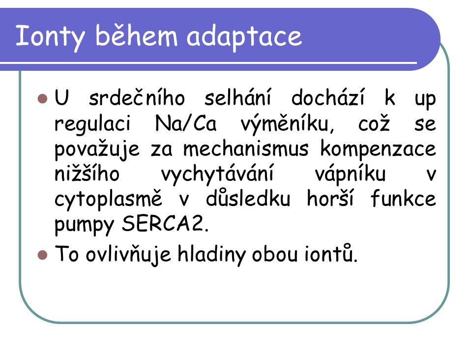 Ionty během adaptace