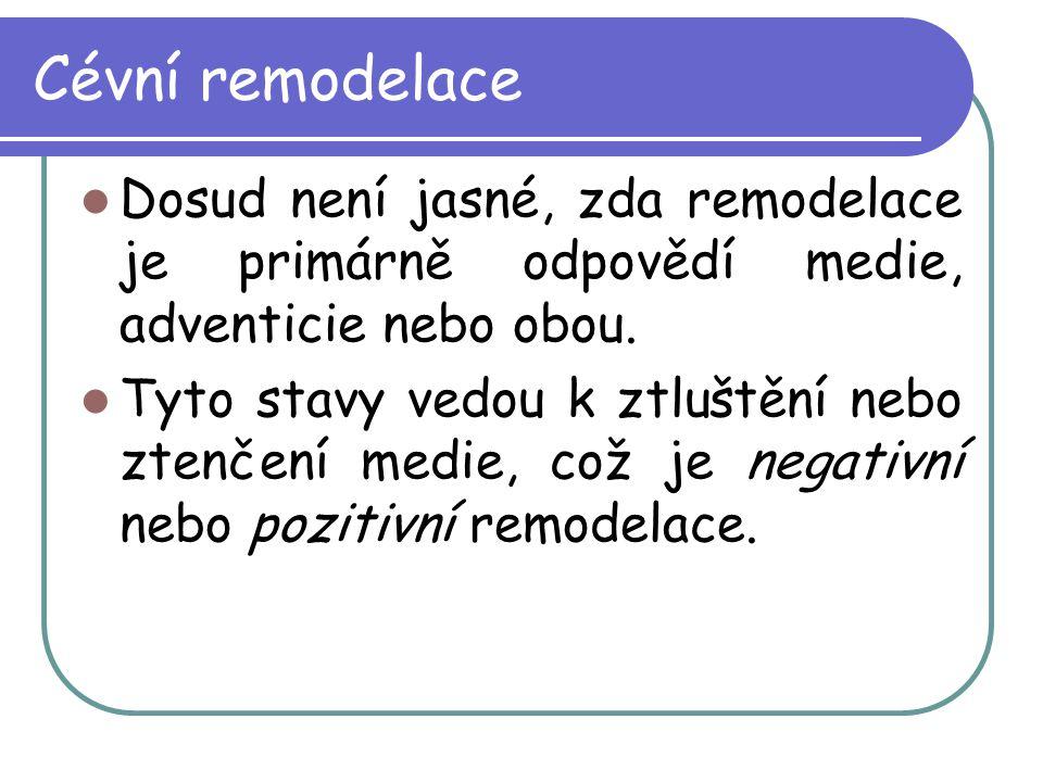 Cévní remodelace Dosud není jasné, zda remodelace je primárně odpovědí medie, adventicie nebo obou.