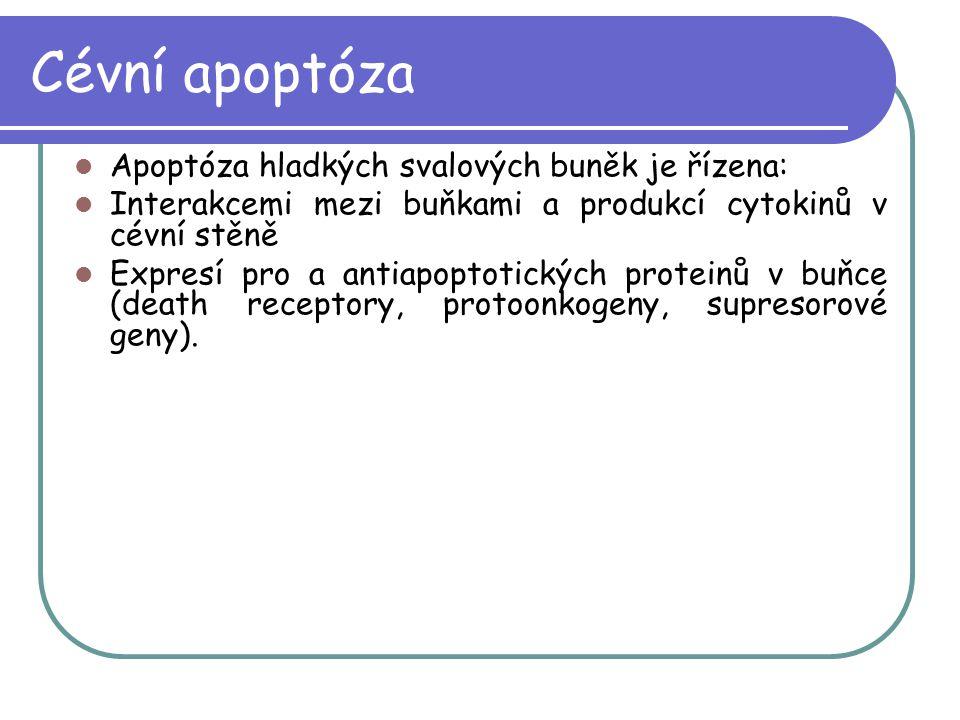 Cévní apoptóza Apoptóza hladkých svalových buněk je řízena: