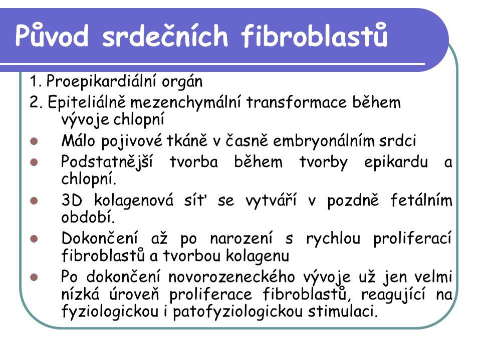 Původ srdečních fibroblastů