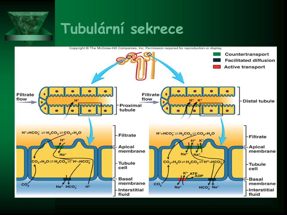 Tubulární sekrece