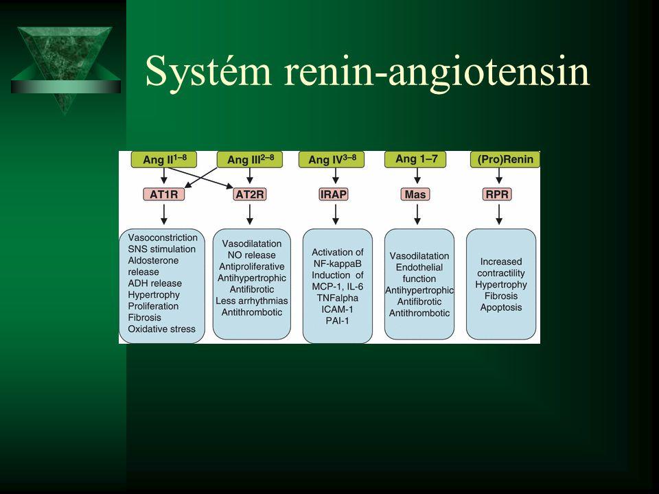 Systém renin-angiotensin