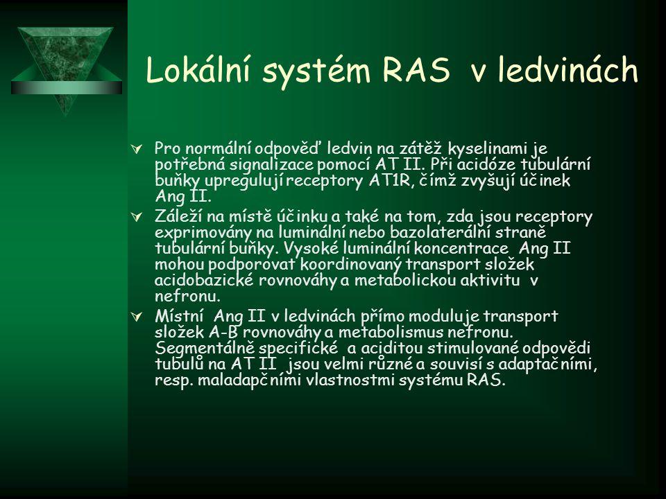 Lokální systém RAS v ledvinách