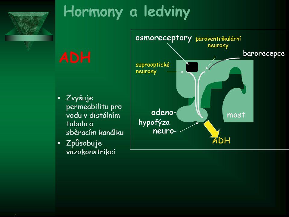 paraventrikulární neurony