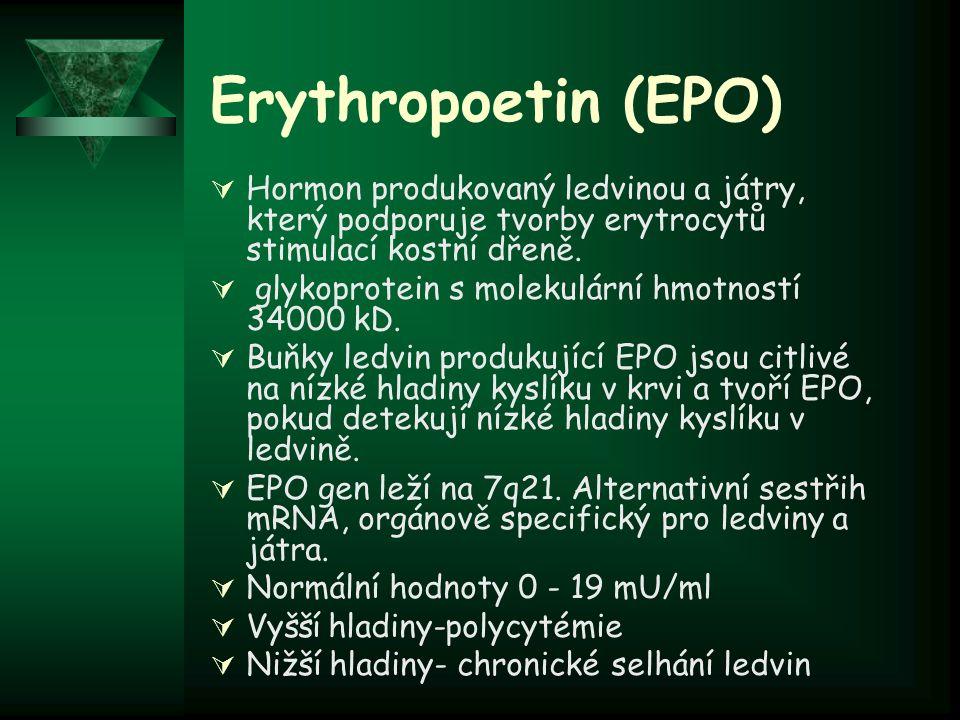 Erythropoetin (EPO) Hormon produkovaný ledvinou a játry, který podporuje tvorby erytrocytů stimulací kostní dřeně.