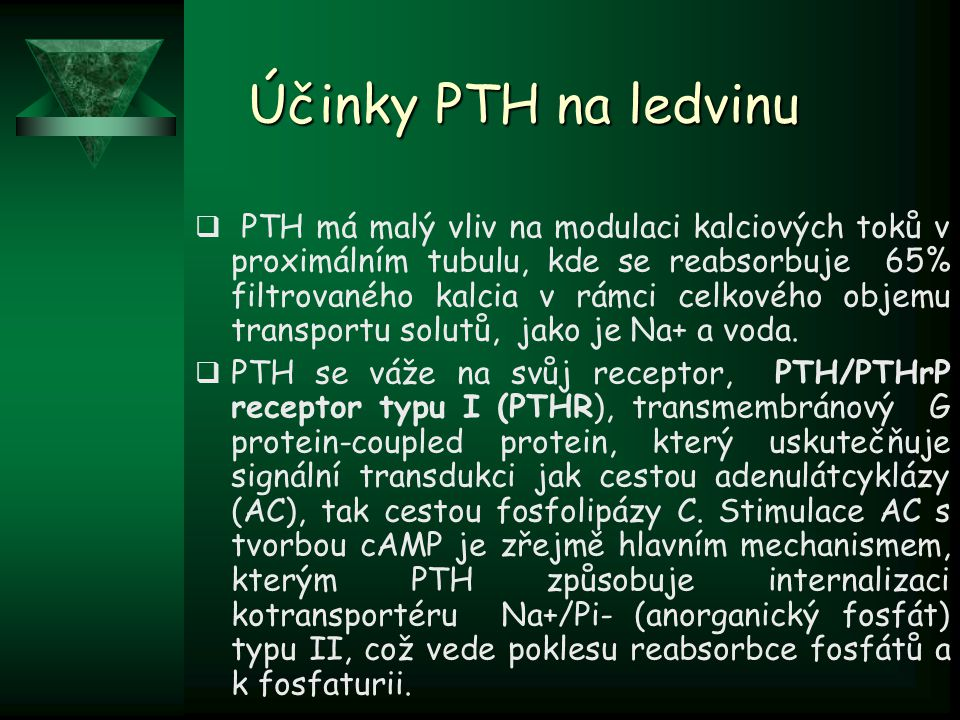 Účinky PTH na ledvinu