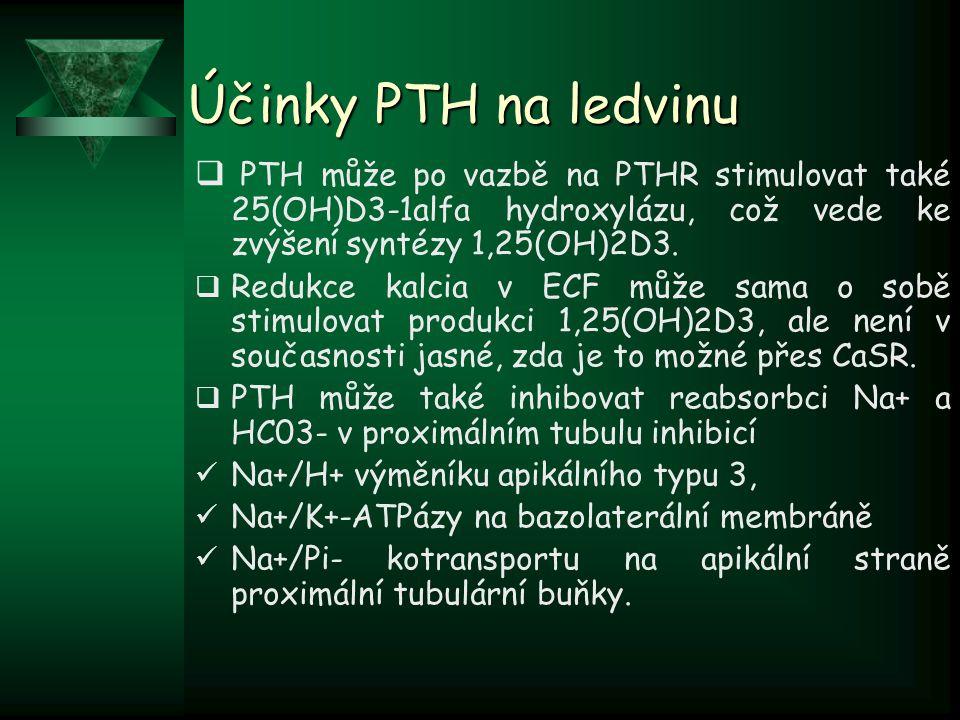 Účinky PTH na ledvinu PTH může po vazbě na PTHR stimulovat také 25(OH)D3-1alfa hydroxylázu, což vede ke zvýšení syntézy 1,25(OH)2D3.