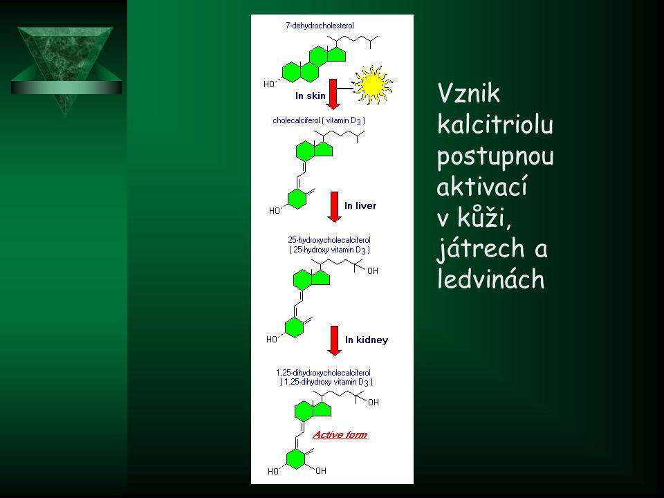 Vznik kalcitriolu postupnou aktivací