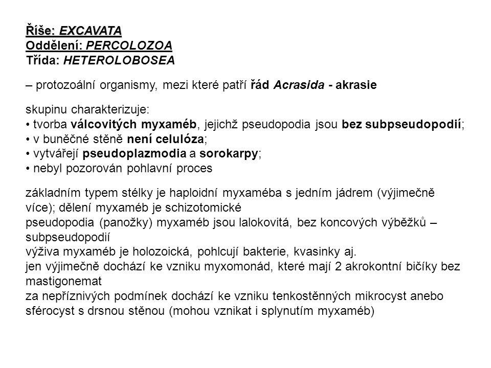Říše: EXCAVATA Oddělení: PERCOLOZOA. Třída: HETEROLOBOSEA. – protozoální organismy, mezi které patří řád Acrasida - akrasie.