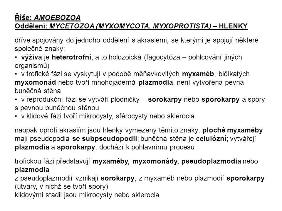 Říše: AMOEBOZOA Oddělení: MYCETOZOA (MYXOMYCOTA, MYXOPROTISTA) – HLENKY.