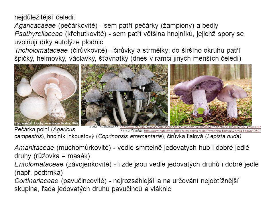 nejdůležitější čeledi: Agaricacaeae (pečárkovité) - sem patří pečárky (žampiony) a bedly Psathyrellaceae (křehutkovité) - sem patří většina hnojníků, jejichž spory se uvolňují díky autolýze plodnic Tricholomataceae (čirůvkovité) - čirůvky a strmělky; do širšího okruhu patří špičky, helmovky, václavky, šťavnatky (dnes v rámci jiných menších čeledí)