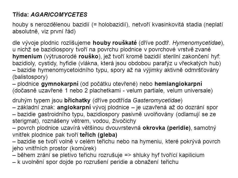 Třída: AGARICOMYCETES