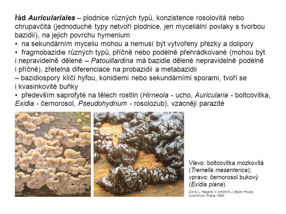 řád Auriculariales – plodnice různých typů, konzistence rosolovitá nebo chrupavčitá (jednoduché typy netvoří plodnice, jen myceliální povlaky s tvorbou bazidií), na jejich povrchu hymenium • na sekundárním myceliu mohou a nemusí být vytvořeny přezky a dolipory • fragmobazidie různých typů, příčně nebo podélně přehrádkované (mohou být i nepravidelně dělené – Patouillardina má bazidie dělené nepravidelně podélně i příčně), zřetelná diferenciace na probazidii a metabazidii – bazidiospory klíčí hyfou, konidiemi nebo sekundárními sporami, tvoří se i kvasinkovité buňky • především saprofyté na tělech rostlin (Hirneola - ucho, Auricularia - boltcovitka, Exidia - černorosol, Pseudohydnum - rosolozub), vzácněji parazité