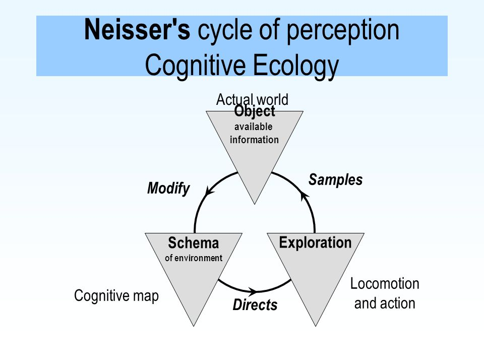 Neisser s cycle of perception Cognitive Ecology